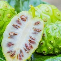 Noni Fruit Tree Seeds (Morinda citrifolia) 25+Seeds