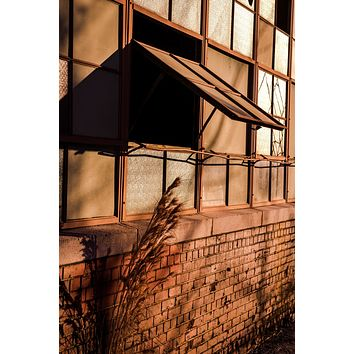 The Cat Dragged In : An Abandoned to Grace Wall Art Print