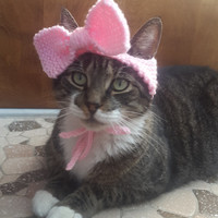 Bow Cat Hat, knit hat for cat