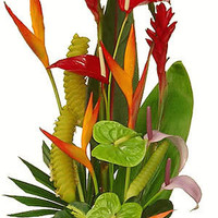 Waipio Wonder Tropical Bouquet with US Delivery Included