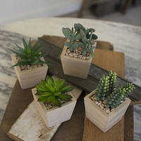 Artificial Succulents In A Wooden Pot (Set of 4)