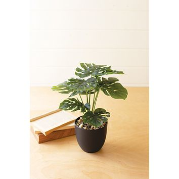 Artificial Monstera Plant In A Plastic Pot Small