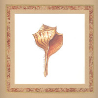 "Turnip Whelk Shell 10"" x 10"" custom matted lithograph"