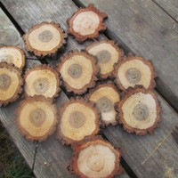200 frest cut Oak rounds great for buttons and crafts