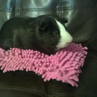 Shag pillow cuddle bed for guinea pigs, hedgehogs, ferrets, rats, rabbits and other small animals cavy