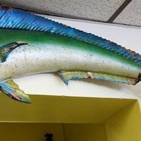 Vintage 50s Taxidermy Tropical Fish Mount Wall Art