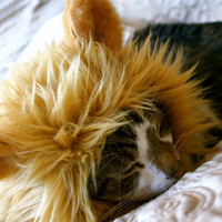 Lion Hat for Cats or Small Dogs