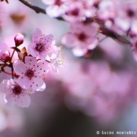 New pink spring. Pink dreams by Guido Montañés