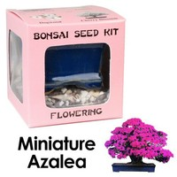 Eve's Miniature Azalea Bonsai Seed Kit, Flowering, Complete Kit to Grow Azalea Bonsai from Seed
