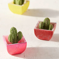 UO Exclusive Blind Box Grow Cactus Figure - Urban Outfitters