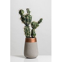 """18.5"""" Cacti Collection"""