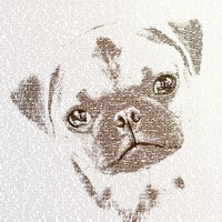 The Intellectual Pug Stretched Canvas by Paula Belle Flores