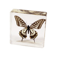 Swallowtail Butterfly Paperweight