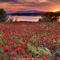 """""""Sea of poppies"""". Sunset at the lake by Guido Montañés"""