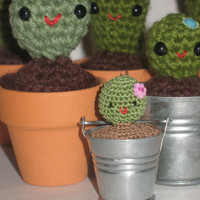 Itty Bitty Cactus in a metal bucket